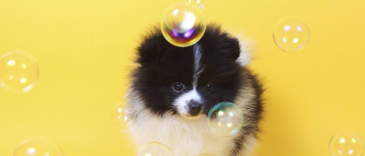 Dog with soap bubbles
