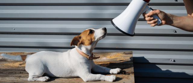 dog training mishaps