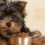 dog-with-food-banner[1]
