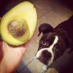 dog_avocado