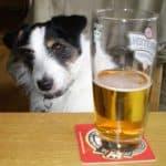 dog_beer