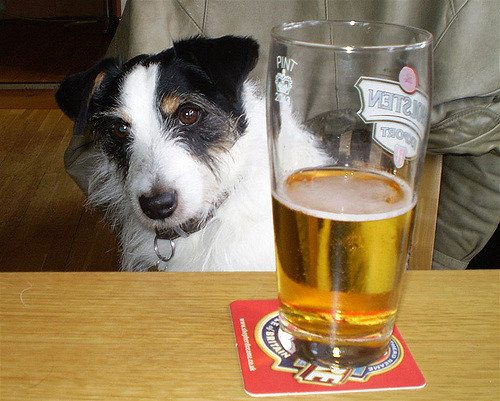 Dog and a half-full glass of beer