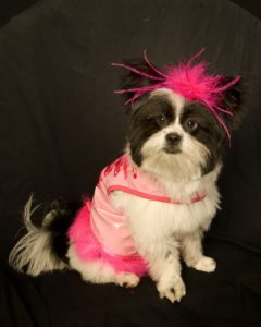 dog in lady costume