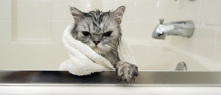 Cat in a bath