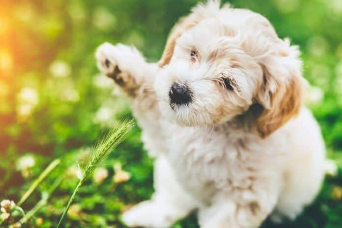 Puppy playing with a plant