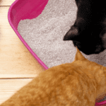 training cat to use litter tray