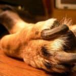 older-dog-nails