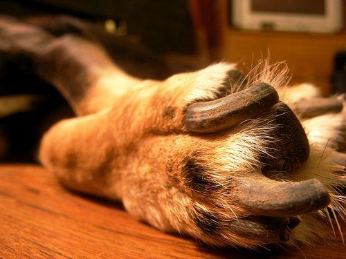 Older dog nails