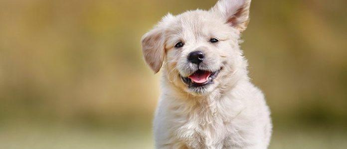 Happy running puppy