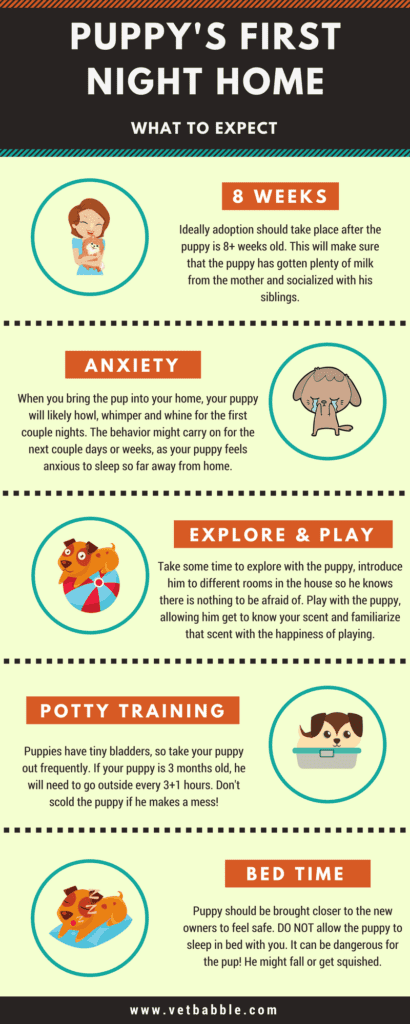 Puppy's First Night Home Infographic