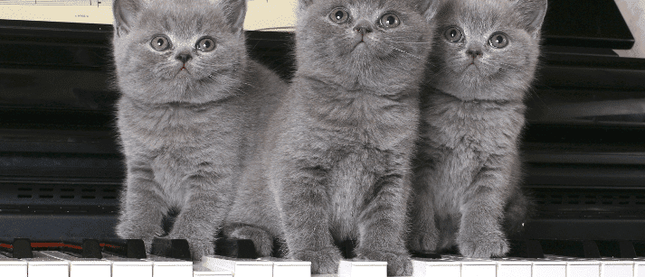 Three cats on a piano