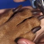 The No Fear Way To Trim Your Dog's Nails