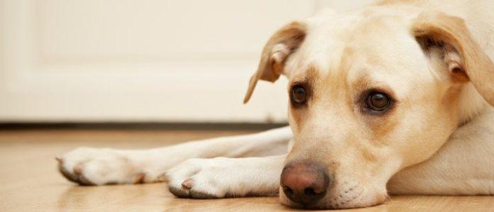 dog lying down on the floor