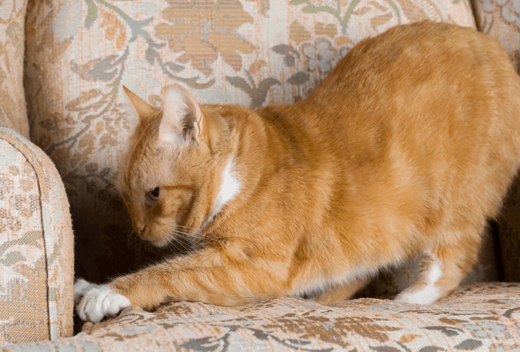 cat stretch