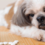 benadryl for pets